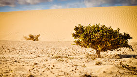 Single plant on the endless desert Royalty Free Stock Photos