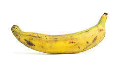 Single Plantain Stock Photography