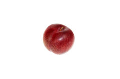 Single plum. Single red plum with stalk Stock Images