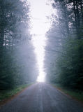 Single point perspective down fog obscured, forest-lined road. Stock Photography