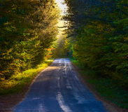 Single point perspective down a narrow woodland road.   Misty tree-top woodland in bright sunlight, shady tree & forest-lined road Stock Photography