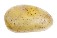 Single potato Stock Photography