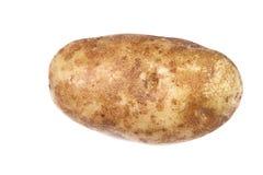 Single potato over white Stock Images