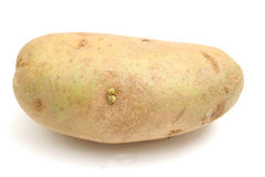 Single potato on white Stock Photos