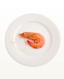 Single Prawn on plate Royalty Free Stock Photo