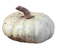 Single Pumpkin Royalty Free Stock Photo