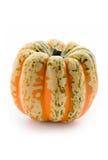 Single pumpkin Royalty Free Stock Photos