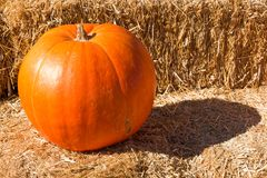 Single Pumpkin on a Hay Bale in Autumn Royalty Free Stock Image