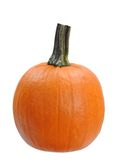 Single pumpkin Stock Image