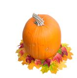 Single pumpkin isolate on white Royalty Free Stock Image