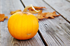 Single Pumpkin with Leaves Royalty Free Stock Images