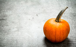 Single pumpkin . Stock Photography