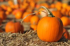 Single pumpkin sits on hay in field Royalty Free Stock Photos
