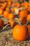 Single pumpkin sits on hay in field Royalty Free Stock Images