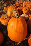 Single pumpkin sits on hay in field Stock Image
