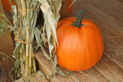 A single pumpkin sitting on a wood plank floor Stock Images