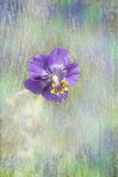 Single purple cranesbill with paint effect background Stock Photos