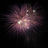 Single purple fire works at night. Stock Photography