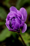 Single Purple Flower Stock Image