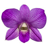 Single purple orchid isolate. Single Purple Orchid On White Background stock images