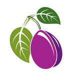 Single purple simple vector plum with green leaves, ripe sweet f Stock Photos