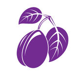 Single purple simple vector plum with leaves, ripe sweet fruit i Royalty Free Stock Photos