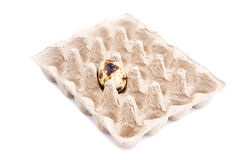 Single quail egg in cardboard tray Stock Images