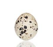 Single quail egg. Royalty Free Stock Image