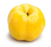 Single quince Royalty Free Stock Image