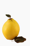 Single Quince on the White Background Stock Photos