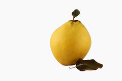 Single Quince on the White Background with leaf Royalty Free Stock Photos