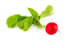 Single radish over white. Single radish on a white background Royalty Free Stock Photo