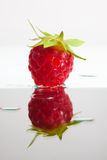 Single raspberry Stock Image