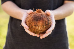 Single raw coconut Stock Photography
