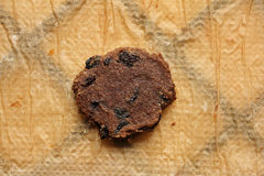 Single raw food flax cookie with raisins Stock Image