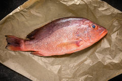 Single Raw Red snapper fish on backing paper, top view.  Stock Photography