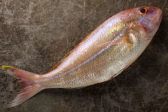 Single Raw Sea bream fish on metal background, top view Stock Photos