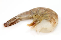 Single raw shrimp Stock Images