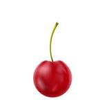 Single Realistic Cherry Isolated on White Background Stock Image
