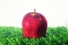 Single Red Apple on Green Grass. For stock photo stock image