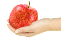 Single red apple in a hand of woman. Isolated on white background. Close-up. Studio photography stock images
