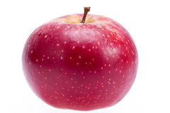Single red apple isolated on white background, close up.  royalty free stock images