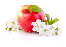 Single Red Apples with Leaf and Flowers Royalty Free Stock Images
