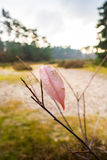 Single red autumn leaf on a twig Royalty Free Stock Photos