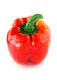 Single red bell pepper. Royalty Free Stock Photos