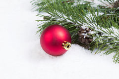 Single Red Christmas Ornament with Seasonal Fir Branch Royalty Free Stock Images