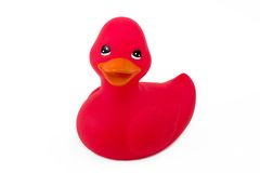 Single Red Duck Isolated On White Stock Photo