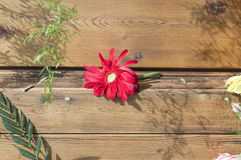 Single red flower on wood plank Stock Photography
