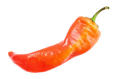 Single red fresh chilli-pepper Royalty Free Stock Image