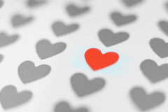 Single red heart in focus and many gray hearts. Single red heart in focus between many gray hearts concept of love choice Stock Image